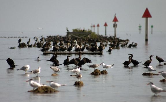 畢思肯國家公園 (Biscayne National Park) 有95%是水域。 非常類似明尼蘇達 (Minnesota) 的探險家國家公園 (Voyageurs National Park) , 它們都是以水為主體的國家公園,陸地存在的意義只不過是碼頭和遊客中心之類的硬體設施非得蓋在地面, 或是水裏剛好有些小島罷了。這些陸地的面積非常小,在地面上既不好看也不好玩。而比Voyageurs更加極端, 即使在水面上還是不會覺得好看好玩,整個公園的存在意義其實是在水面下。 整個畢思肯國家公園 (Biscayn