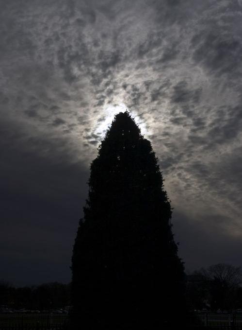 旅人行腳 國家耶誕樹