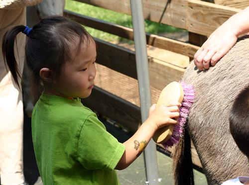 动物园照顾小动物